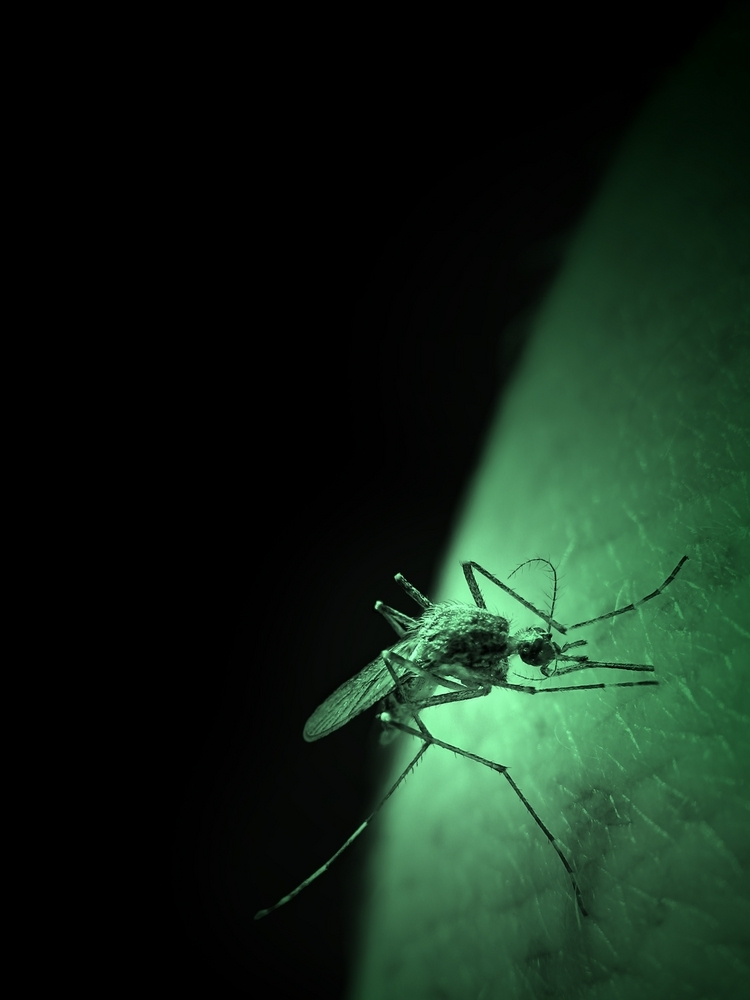 Pincers and Mosquitos